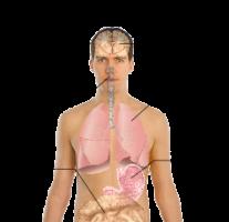 250px-symptoms_of_swine_flusvg