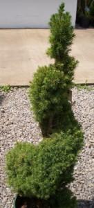 topiary3