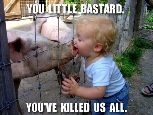 pig-kisser